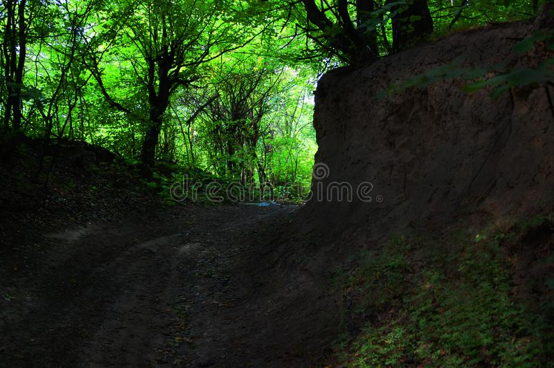 Shadowy path in the Carpathian mountains green forest with the sun in the deep stock photography
