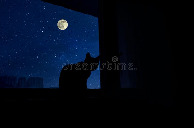 Dark room in the silhouette of a cat sitting on a window at night. Cat sit by the windowsill in moonlight and looking at full moon. Dark room in the silhouette stock images