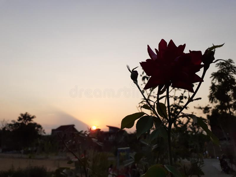 Dark rose to drawing about beautiful sunset at western horizon royalty free stock photo