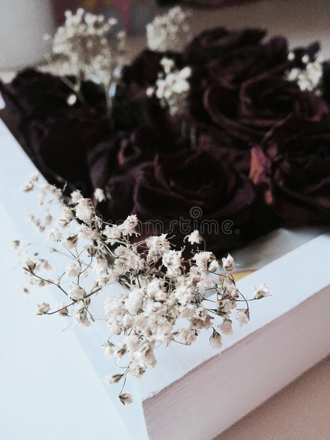 Dark roses stock photography