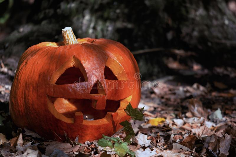 Dark scary forest. Pumpkin with a carved, smiling face. The symbol of Halloween. royalty free stock images
