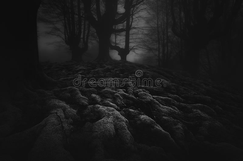 Dark and scary forest with roots royalty free stock photos