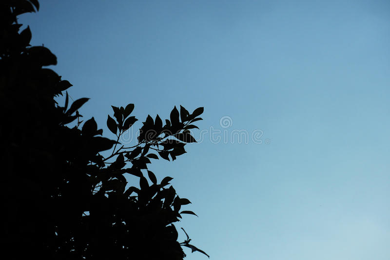 Dark shadow of branches leaves bush royalty free stock photography