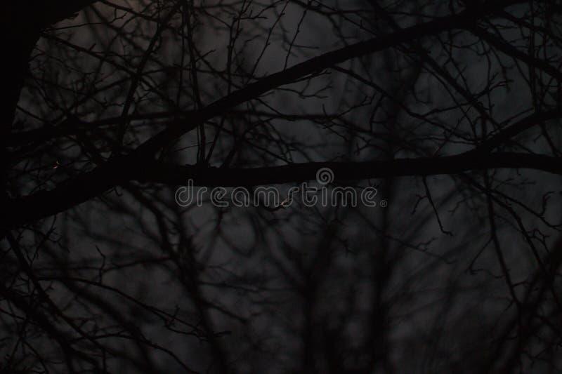 Dark Shot through Creepy Trees stock image