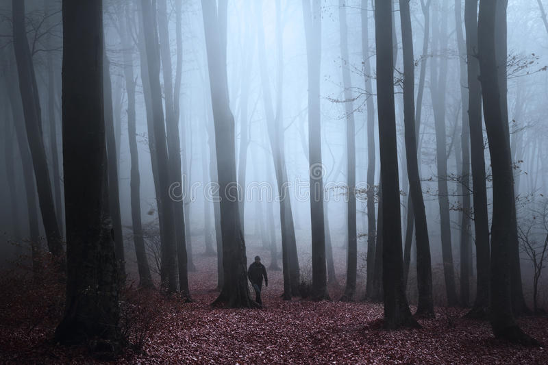 Dark silhouette in spooky forest during a foggy autumn day royalty free stock images