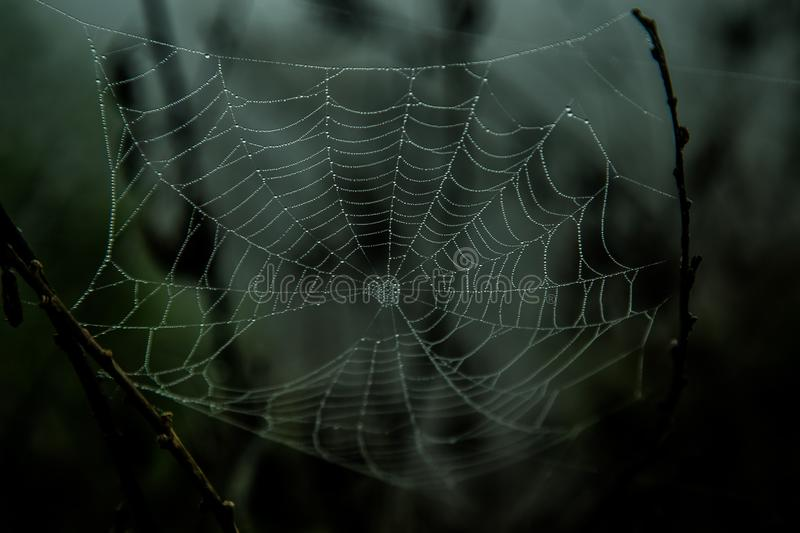 Dark spider web royalty free stock photo