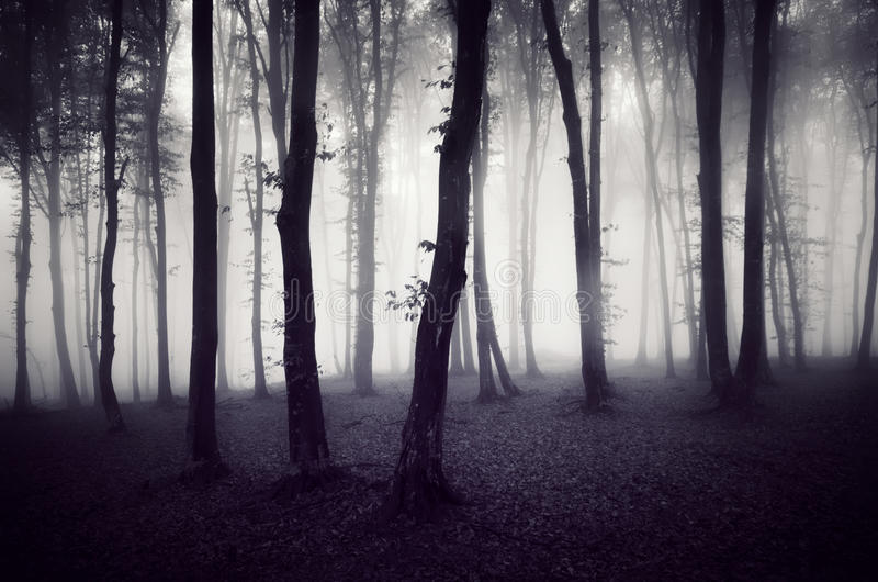 Dark spooky forest on Halloween royalty free stock images