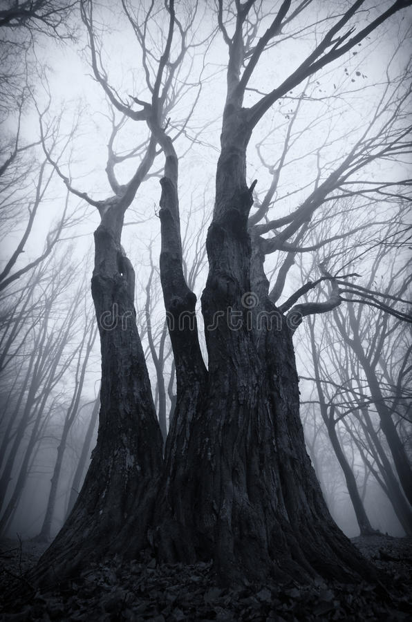 Dark spooky giant tree on Halloween stock image