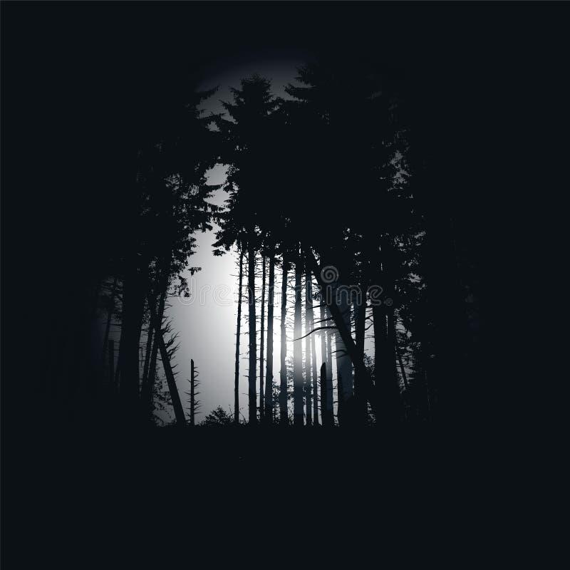 Dark Spruce Forest At Night Stock Photo