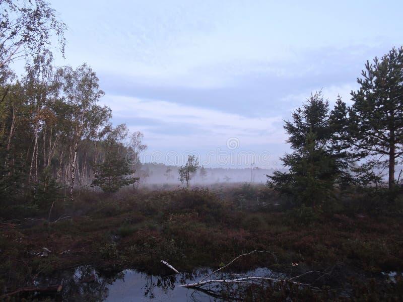 Dark sunrise, Lithuania royalty free stock images