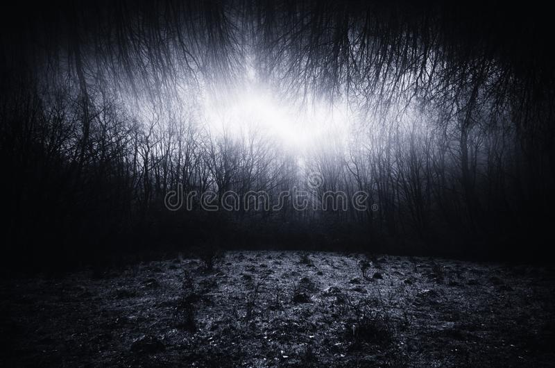 Dark surreal landscape with meadow and infinite forest. Dark surreal haunted landscape with meadow and infinite forest with branches royalty free stock photo