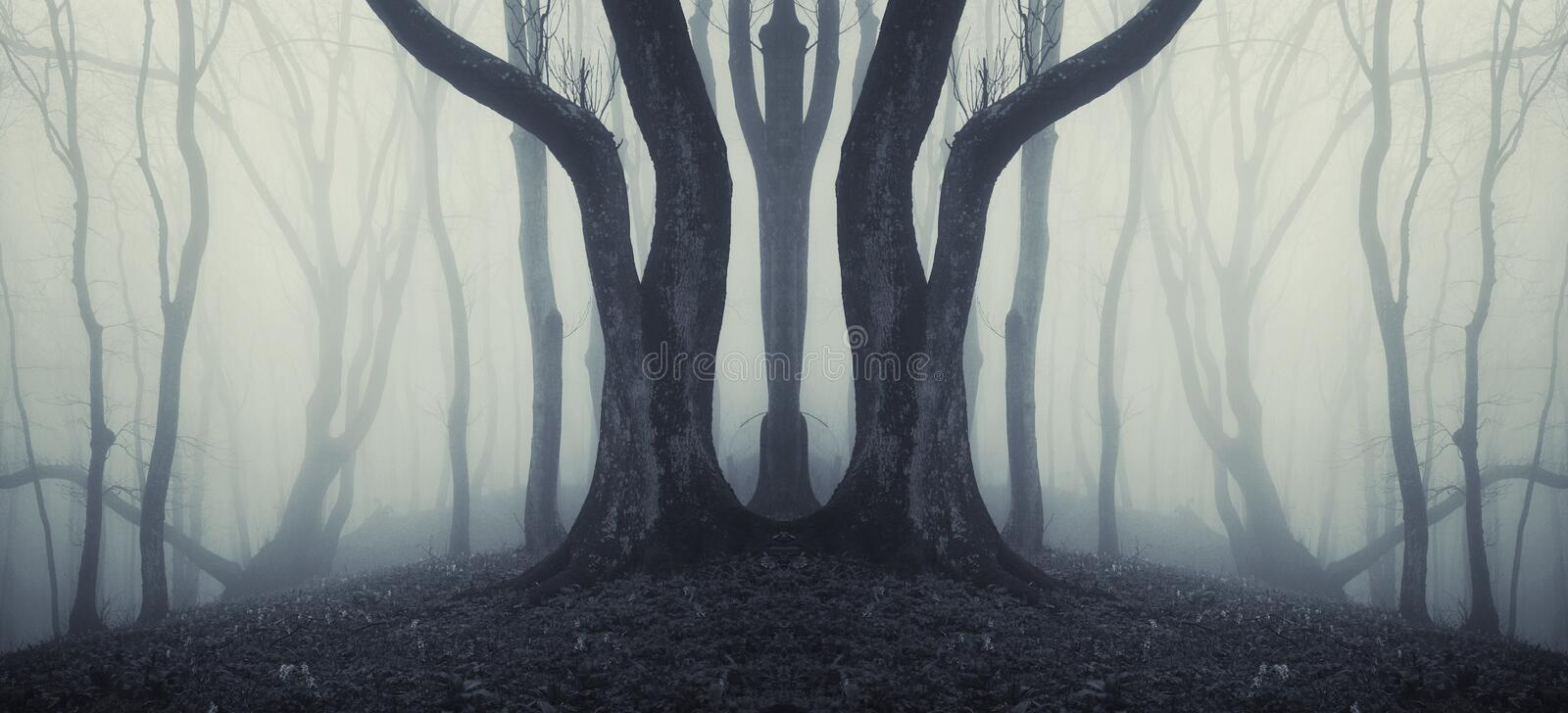 Dark symmetrical forest with strange huge tree and mysterious fog stock image