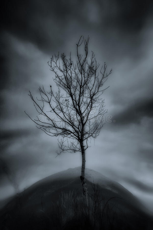 Dark Tree Stock Photos