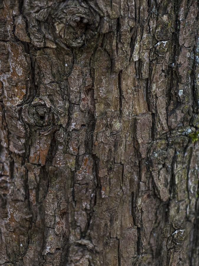 Tree bark Texture. Background of bark of old oak. stock photo