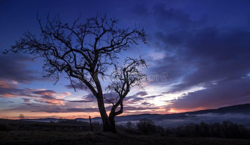 Dark tree over lier, norway stock photography
