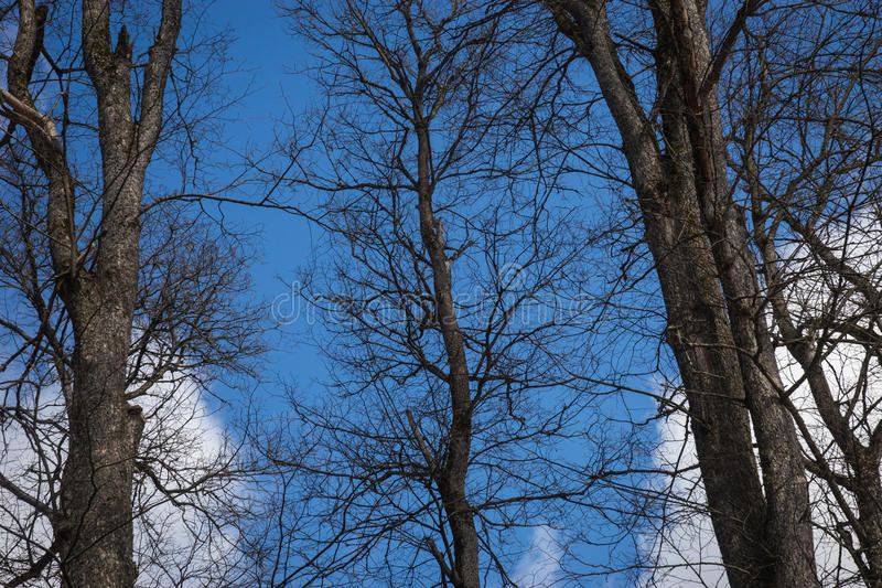 Dark trees branches against the background of blue sky and white stock images