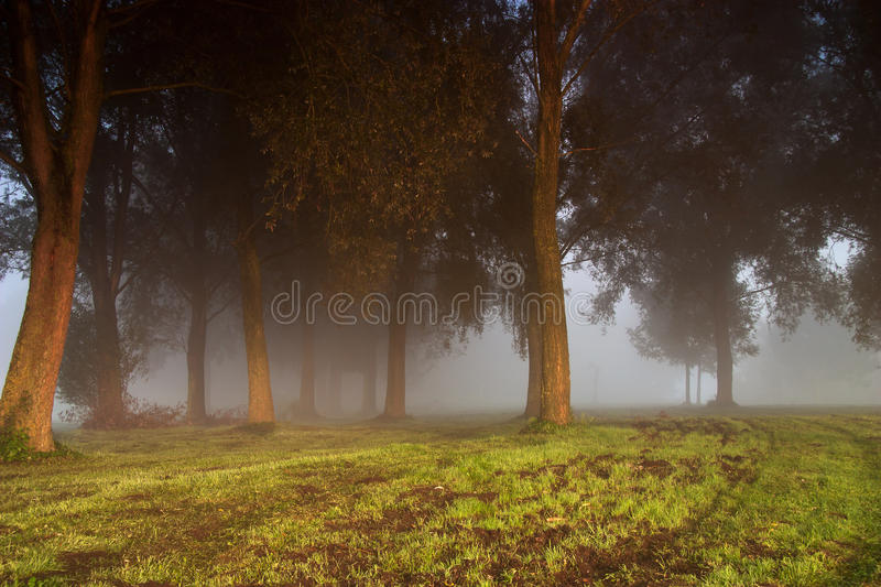 Download Dark trees in the fog stock image. Image of ghost, mystical - 21158227