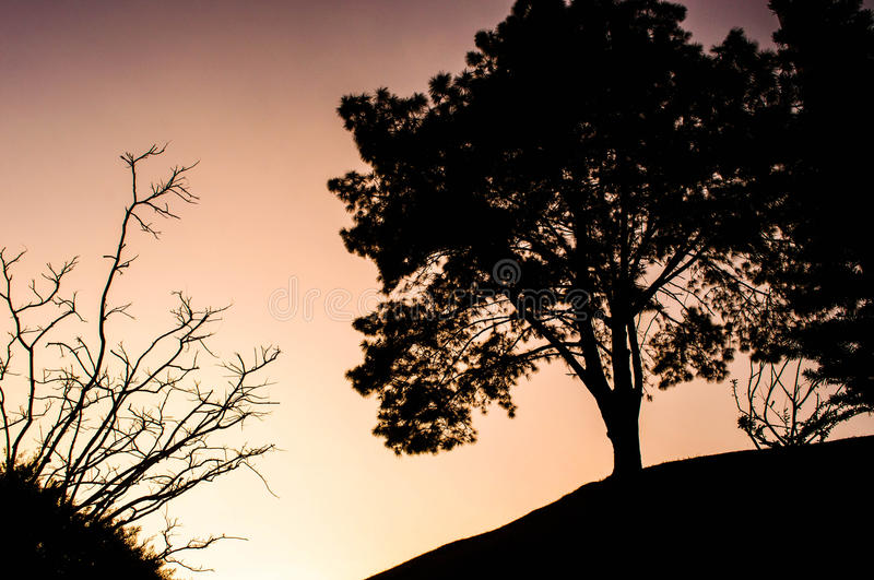 Dark trees in pink sky of sunset stock photography