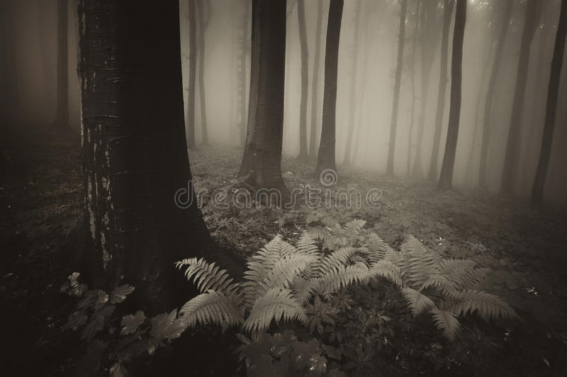 Dark vintage photo of forest with fern royalty free stock photos