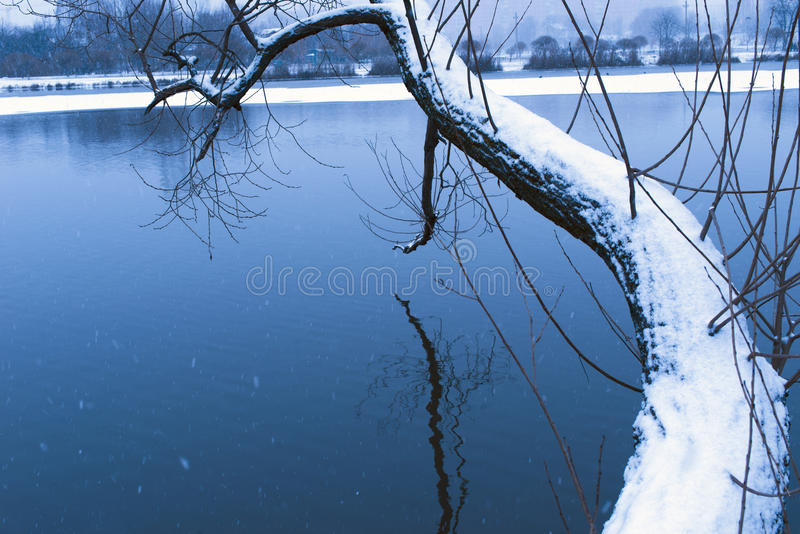 Download Dark winter waters stock photo. Image of landscape, branches - 83721506