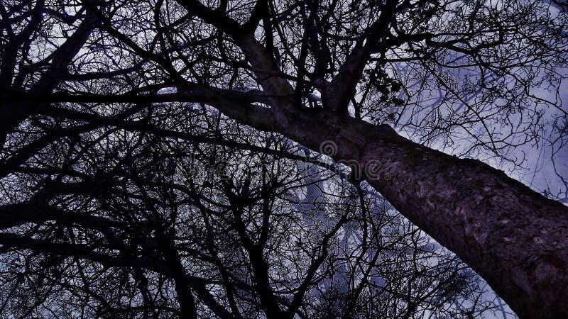 Dark Wood stock photo