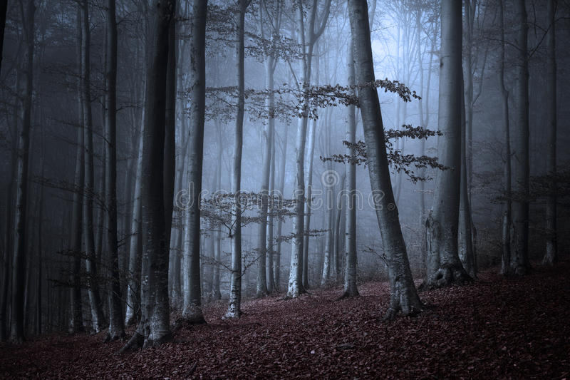 Dark woods in a foggy autumn day royalty free stock images
