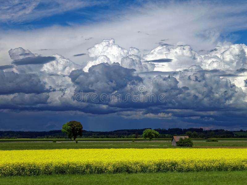 Darkened sky by towering clouds at the countryside in summer. A storm is brewing in the countryside where a yellow blooming canola field brightens the beclouded stock images