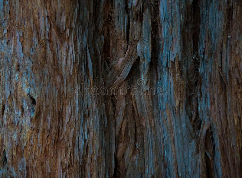 The bark of the sequoias. Darkened by time bark brown-gray bark Sequoia with a pattern of cracks and bends stock photos
