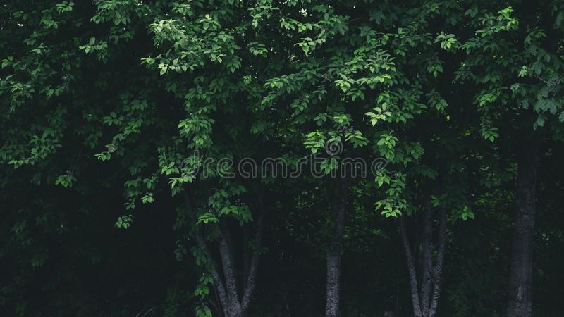 Darkness behind stock photography