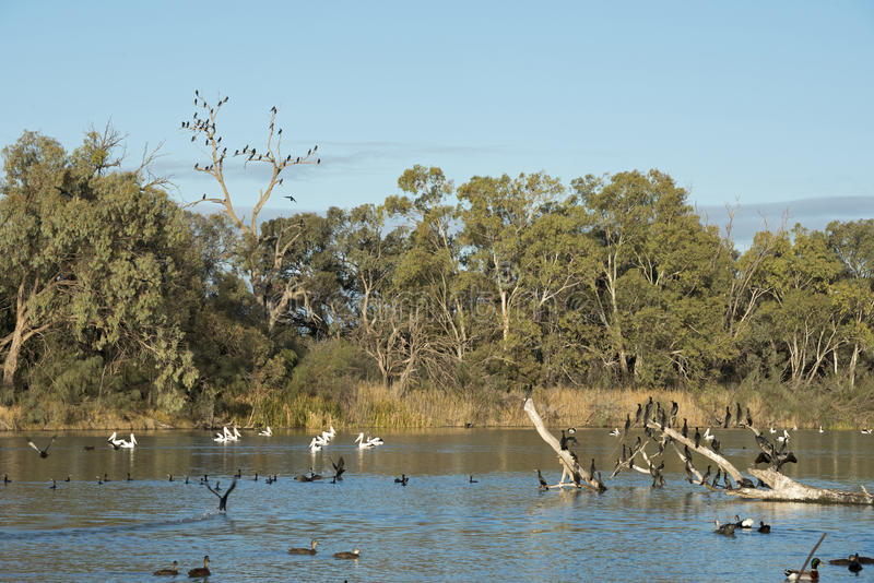 Darling river. At Wentworth,NSW, Australia stock photos