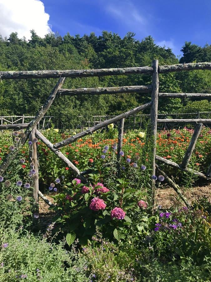 darmstadt trädgård royaltyfri bild