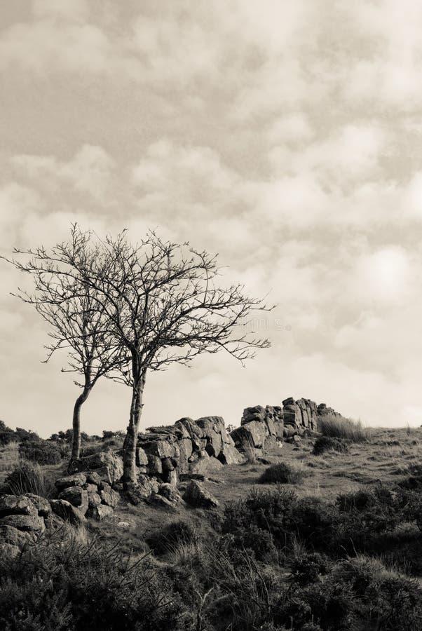 Dartmoor树 免版税库存图片
