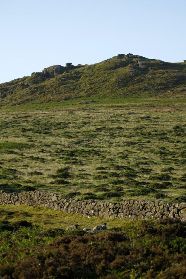Dartmoor花岗岩突岩 免版税库存图片