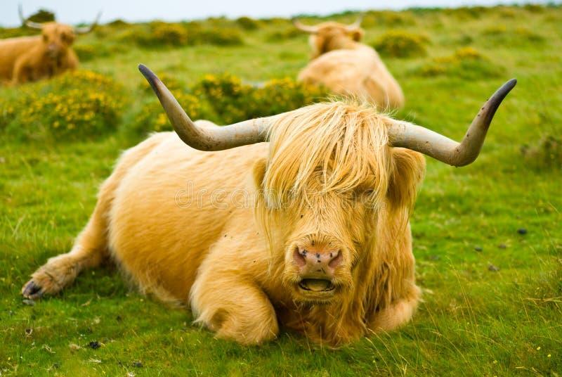 Download Dartmoor Stock Photography - Image: 26656562