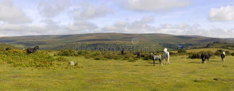 Dartmoor imagenes de archivo