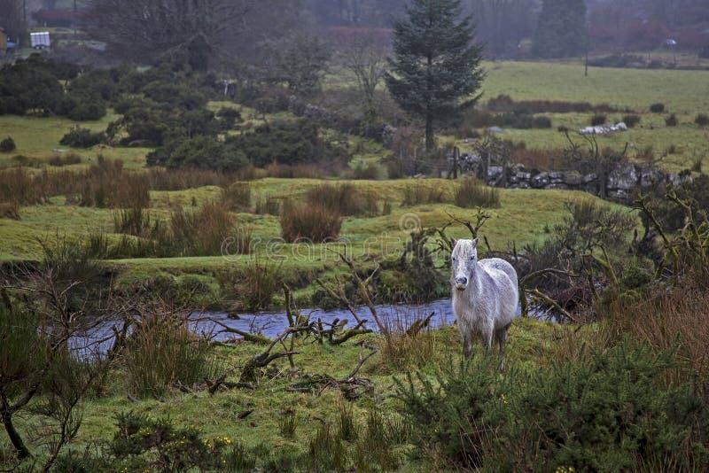 dartmoor royalty-vrije stock fotografie
