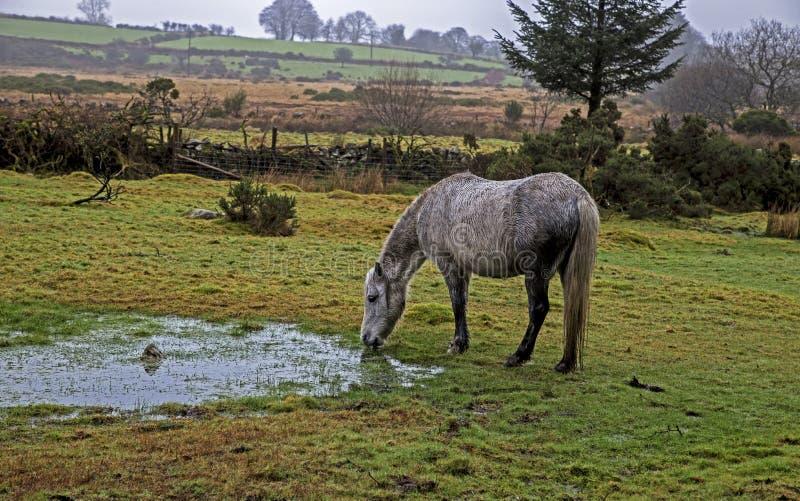 dartmoor imagen de archivo