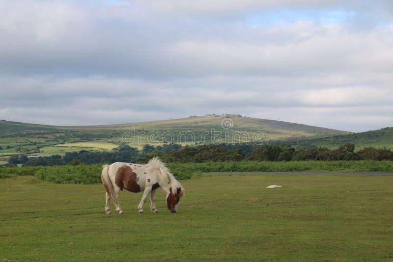 dartmoor zdjęcie stock