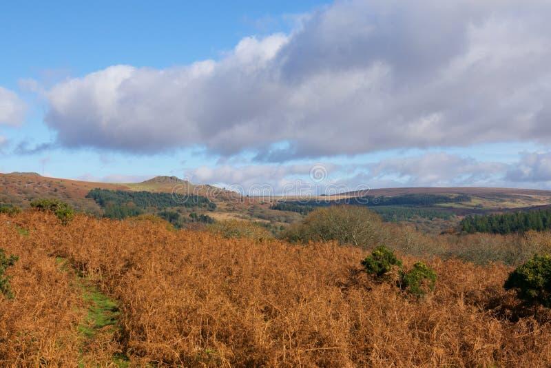 Dartmoor Autumn Colours. Autumn arrives in Dartmoor National Park stock photography