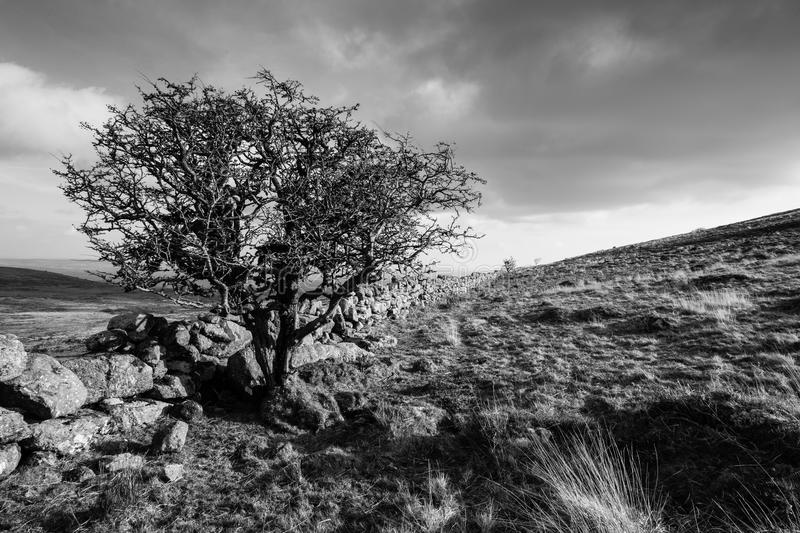 Dartmoor Black and White Landscape royalty free stock photos