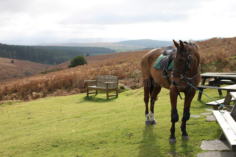 Dartmoor, Devon in England with horse and landscape. Dartmoor horse and landscape with bench, rolling hills and Autumn ferns stock photos