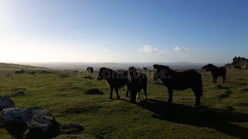 Dartmoor en Devon images libres de droits