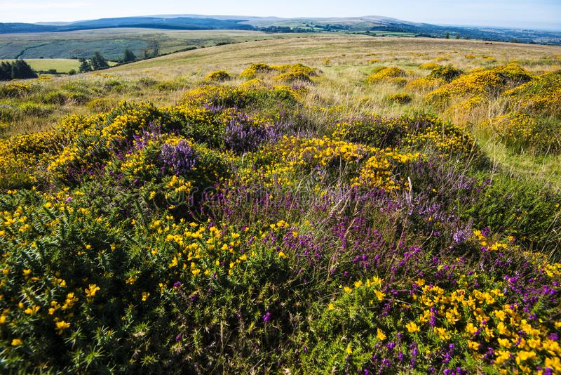 The many colours of Dartmoor, Devon, England. Dartmoor is a granite upland caused by the upthrust of a volcanic plug or pluton which has then weathered stock photography