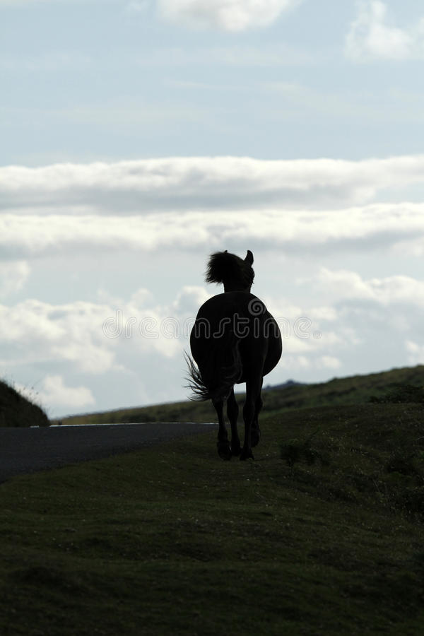 Skyline Horse Silhouette stock photo