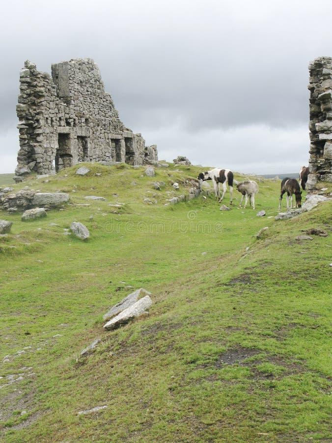 dartmoor konie cumują fotografia stock