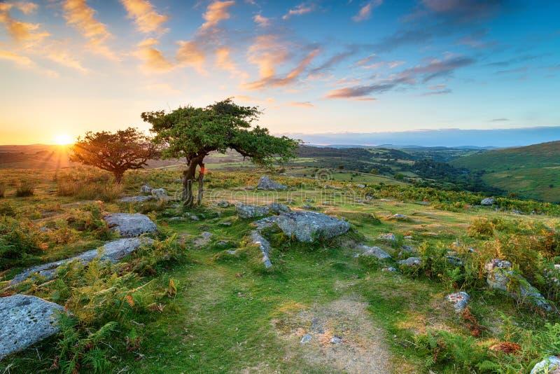 Dartmoor nationalpark royaltyfria bilder