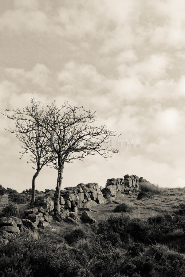 Dartmoor Trees royalty free stock image