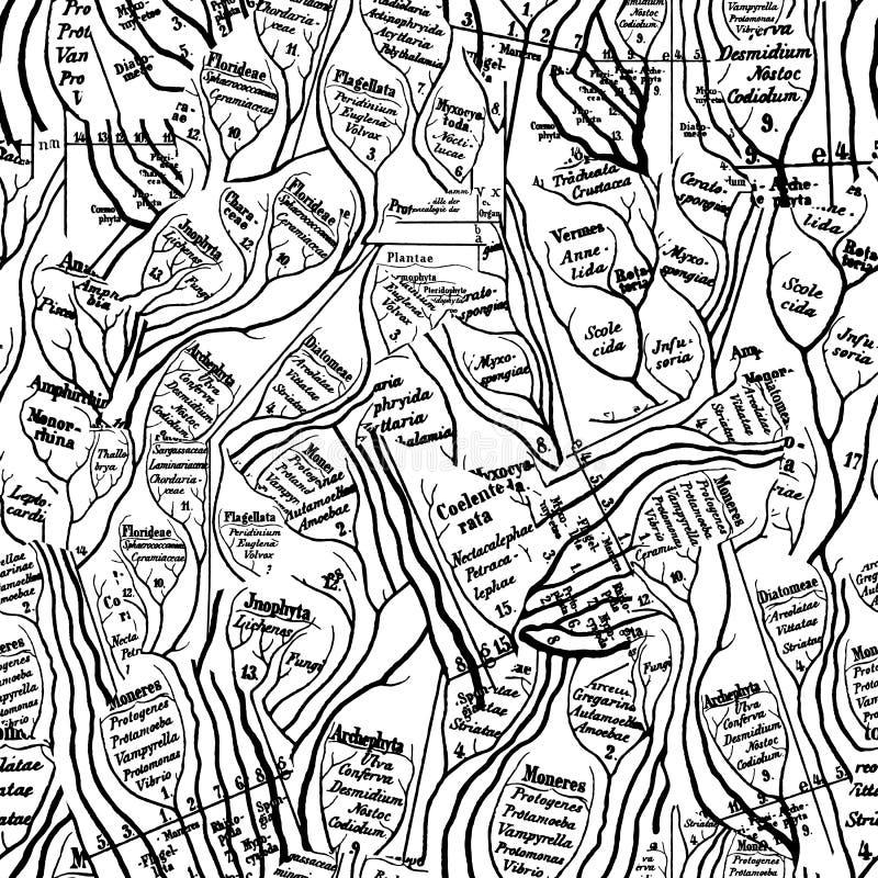 darwin seamless vektor stock illustrationer