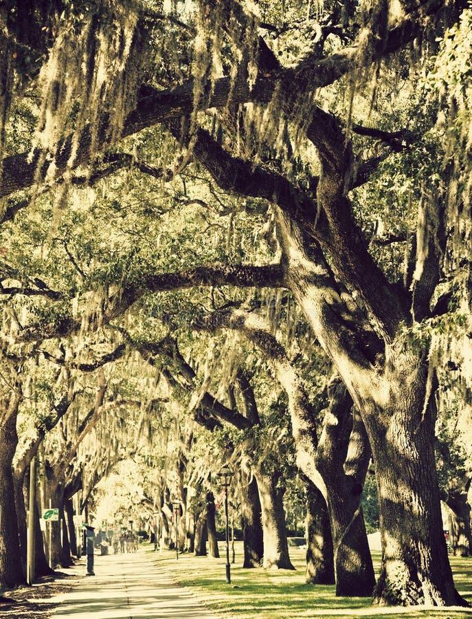 Das árvores baixa dentro do savana fotos de stock royalty free