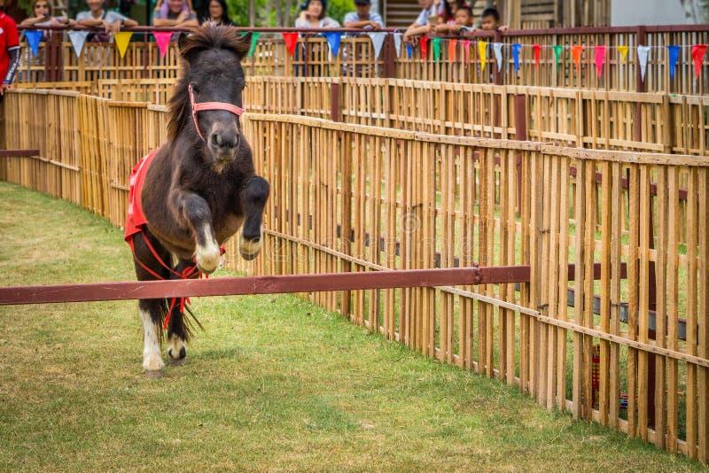 Das absichtliche Pygmäenpferd springt in Pferderennen lizenzfreies stockbild